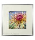 Kristin D. Fundalinski - Chrysanthemum